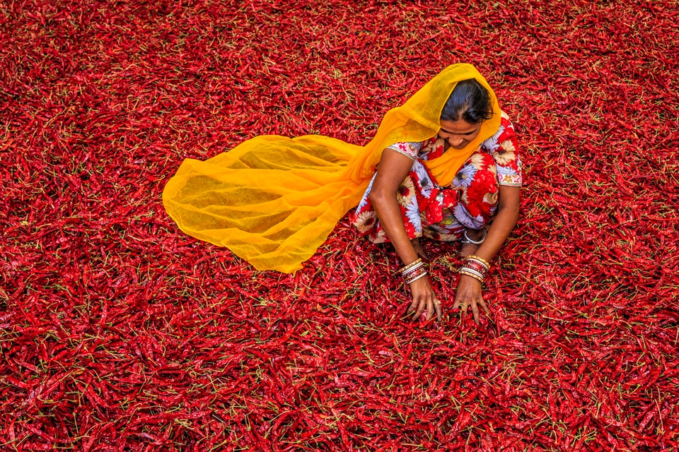 india-woman-chilli-sari-colourful