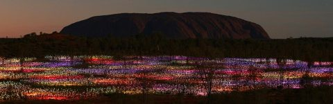 Field of Light virtual tour