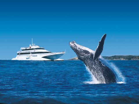 Tangalooma-whale-watching-cruise