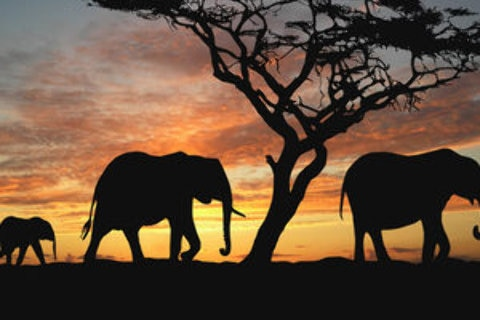 Travel Insider - Elephants with South African sunset