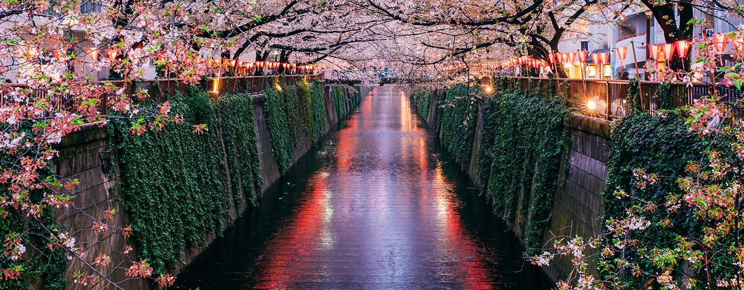 Cherry blossom along the Meguro River in Japan