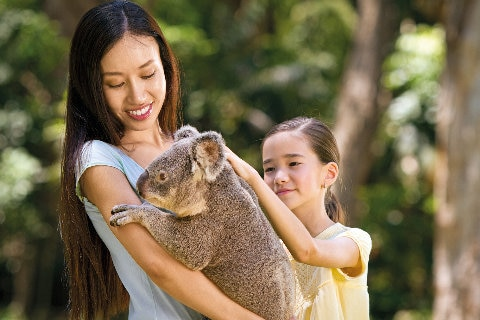 Currumbin Wildlife Sanctuary - A lady holding a koala