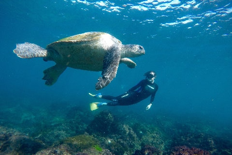 Snorkel with the Turtles with 20% off
