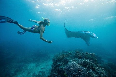 Women snorkelling with sting ray