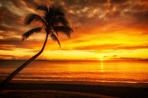 Beach sunset with palm tree