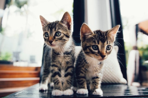 Two cute kittens next to each other