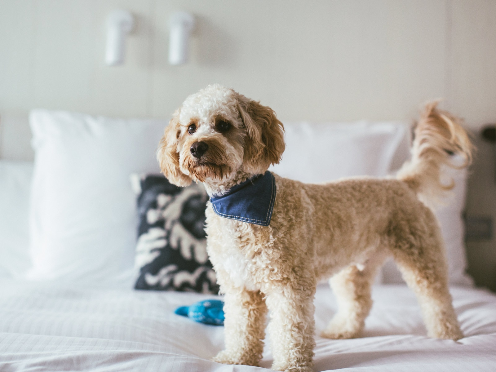 Never Leave Your Furry Friend Behind at These Pet-Friendly