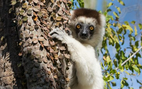 A naturalist's guide to Madagascar with Charlie Gardner