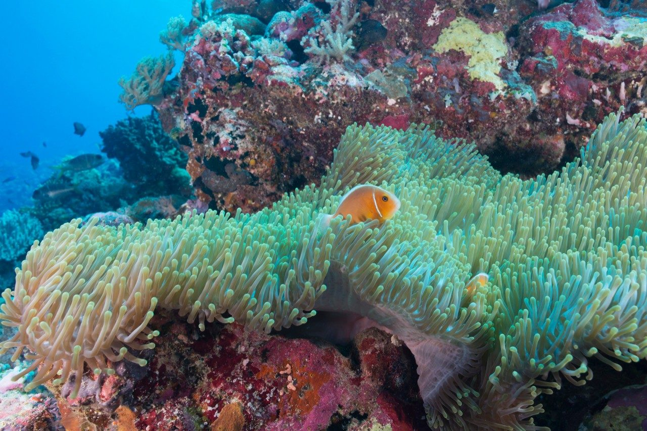 Where to dive and snorkel in Queensland
