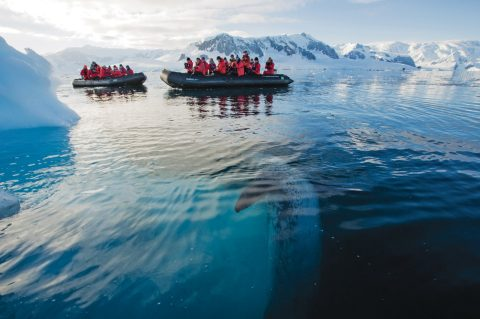 Antarctic offshore excursions