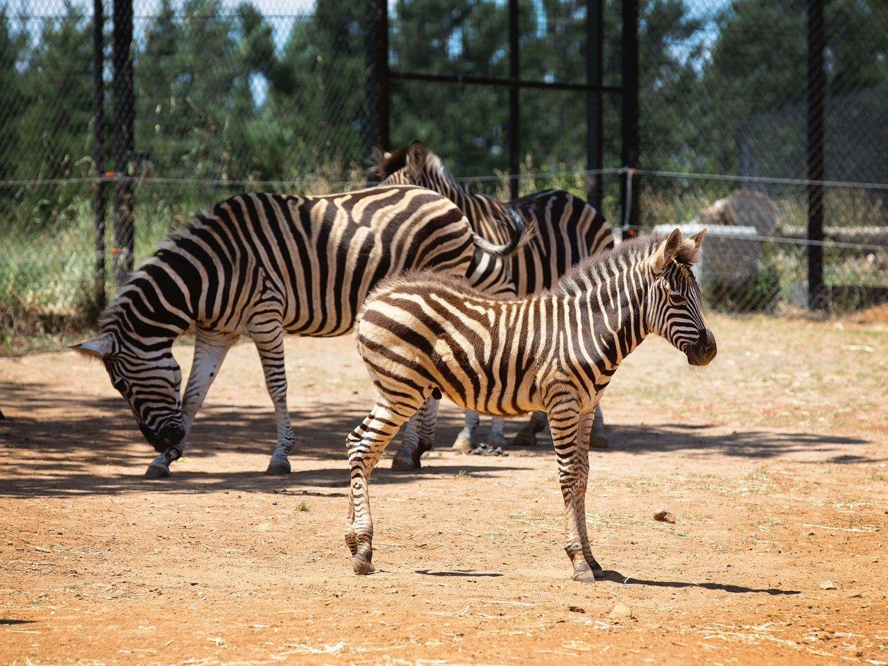 An Overnight Safari at Jamala Wildlife Lodge | Travel Insider