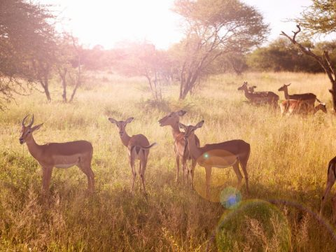 For something close to Johannesburg: Pilanesberg Game Reserve
