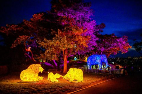 Lights for the Wild, Taronga Zoo