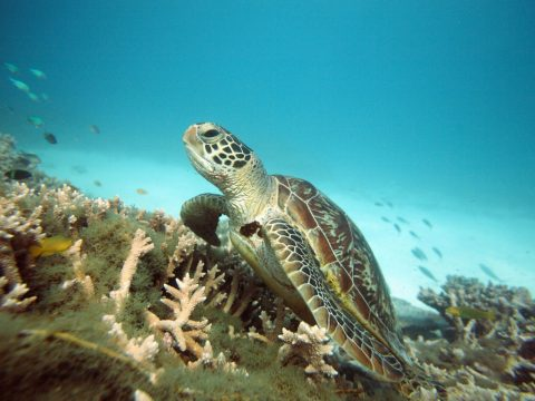 Experience Lady Elliot Island on the Great Barrier Reef
