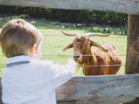 The Best Family Farm Stays in Queensland