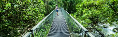 Daintree Rainforest virtual tour