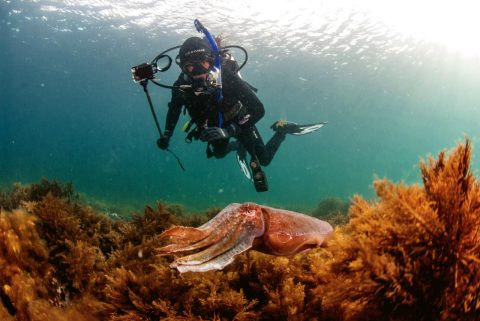 Whyalla diving
