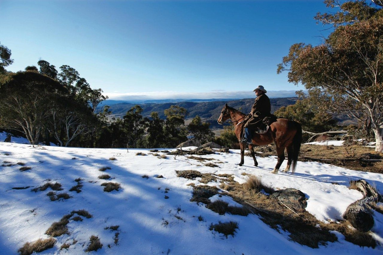 Riding brumbies in the Snowy Mountains