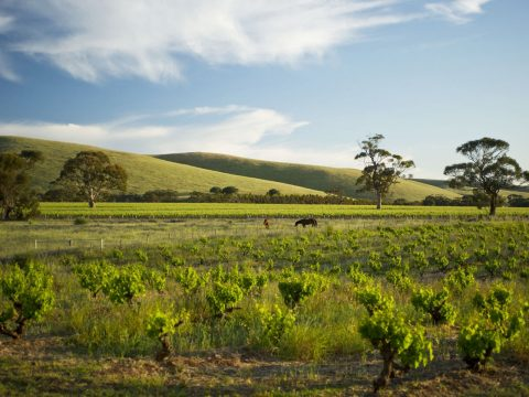 The Best Wines and Cellar Doors in the Barossa in 2017