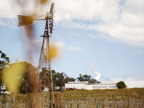 On the Riesling Trail in South Australia's Clare Valley