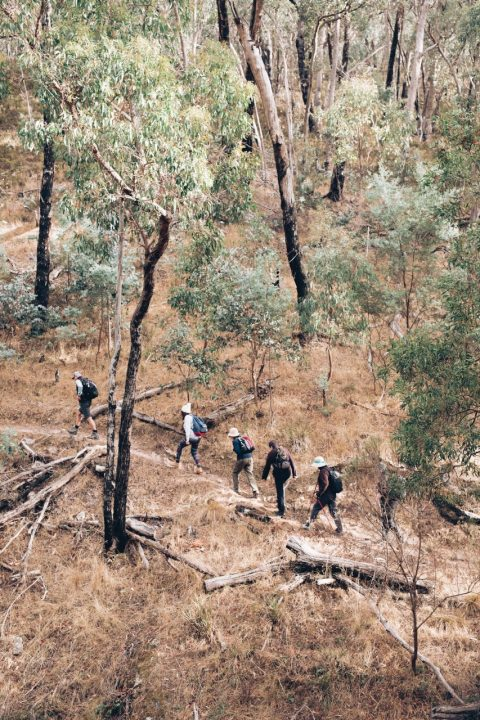 hikers on a track in daylesford