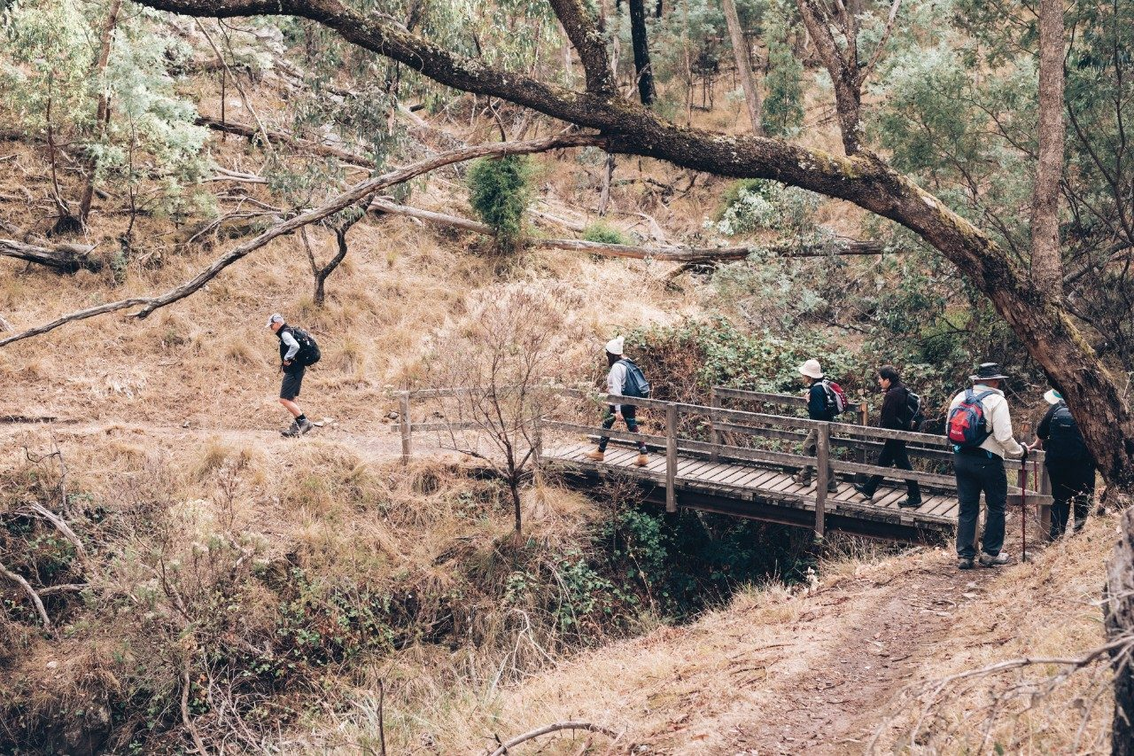 hikers on bush track near daylesford
