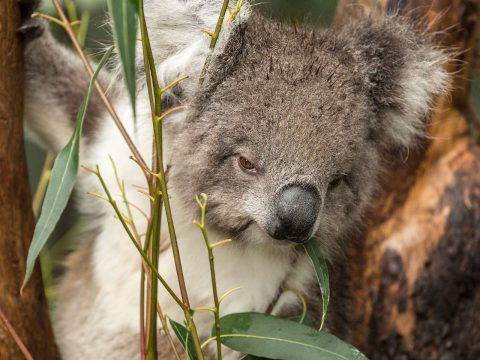 The Best Places to See Wildlife in Melbourne
