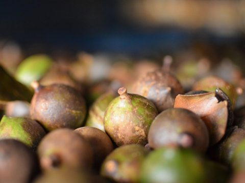 Why Patons Macadamias are the Perfect Australian Gift
