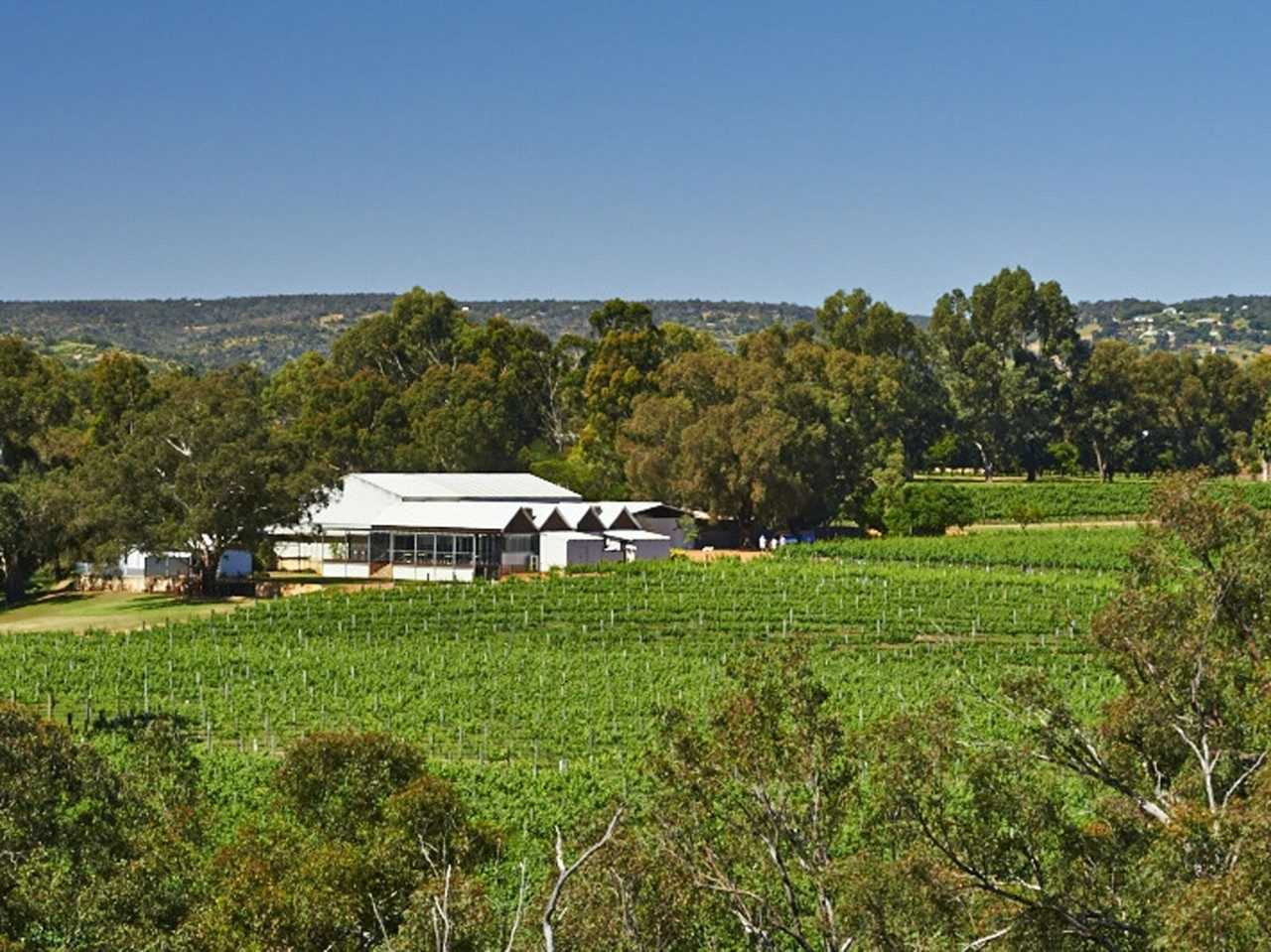 Explore Swan Valley's Food and Wine Trail | Travel Insider