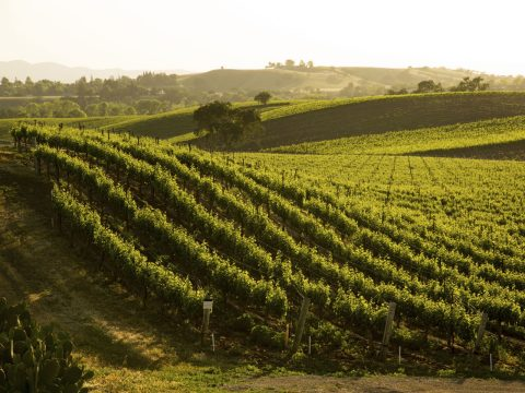 Californian Wine Regions You Don't Know About