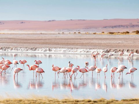 What You Need to See and Do in the Atacama Desert