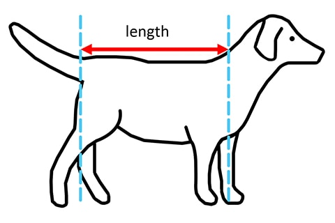 Guide dog measurement diagram