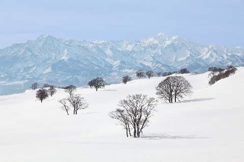 Myoko trees and mountains