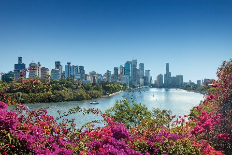 Brisbane city with pink flowers