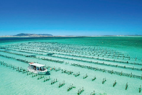 Oyster farm at coffin bay