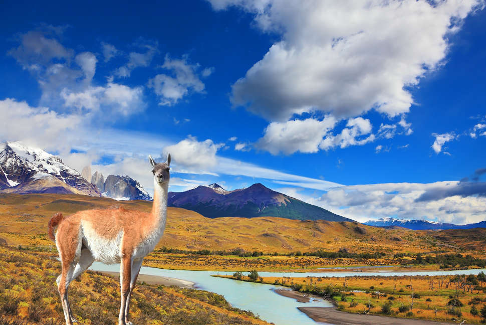 On dirt road is worth guanaco