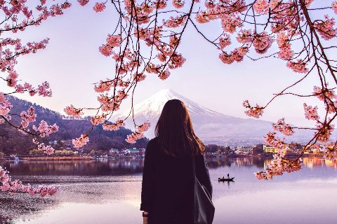 Female admiring view with cherry blossoms, Tokyo, Japan