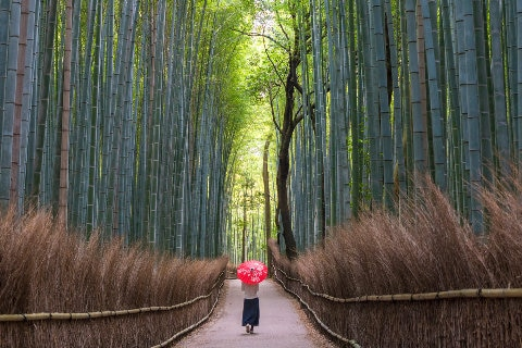 Woman walking along bamboo path in Japan