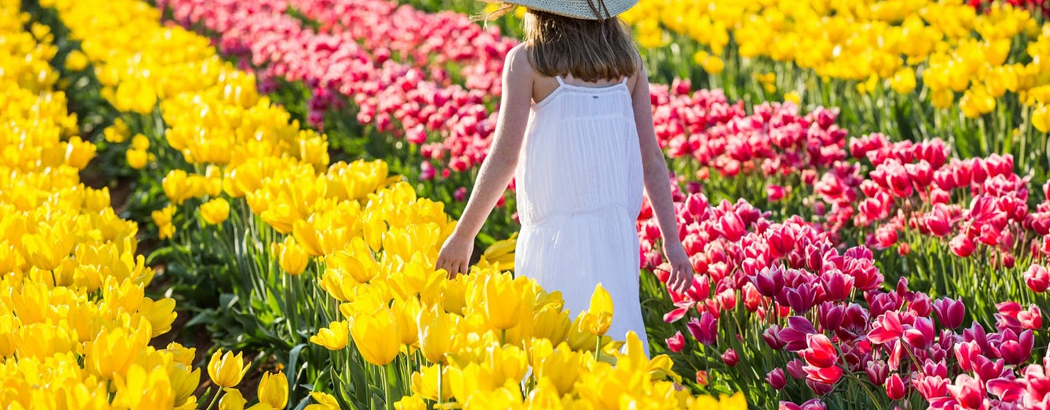 woman in the tulip field